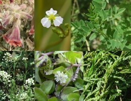 Chinese Herbal Medicines Treat Proteinuria - Kidney Disease Treatment | Research project: history of medicine | Scoop.it