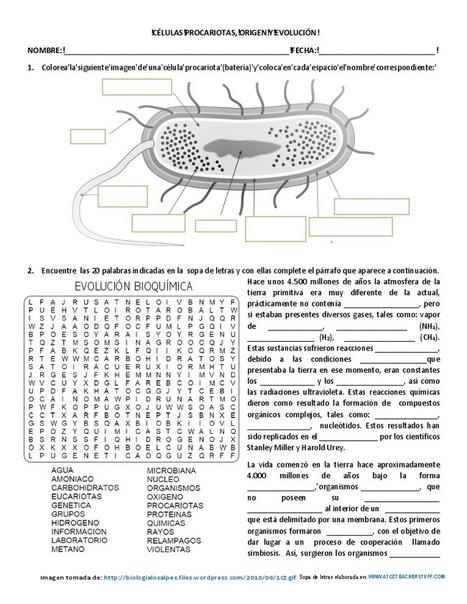 Células procarióticas, origen y evolución - Actiludis | Educacion, ecologia y TIC | Scoop.it