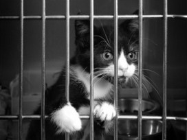 Kittens Find Their Way Into NY Maximum Security Purrison (And Our ...   Cats Rule the World   Scoop.it