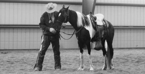 Brooks Gaited Horse Training - Natural Horse Training | Horse and mule news items | Scoop.it