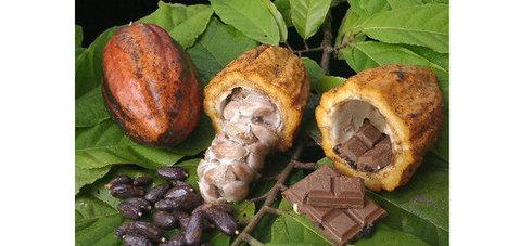 Madagascar : Les paysans dans la filière cacao en grande difficulté | Questions de développement ... | Scoop.it