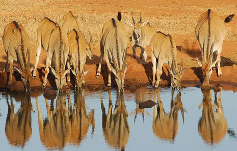 Africa's Best Game Reserves   Odyssey Tours and Travels Blog   Odyssey Tours and Travels   Scoop.it