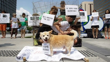 Protesters Want Dogs Taken Off the Menu | READ WHAT I READ | Scoop.it
