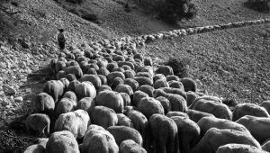 Gestes, Through Work, A Love of The Land | Bastide des Camélias | Scoop.it