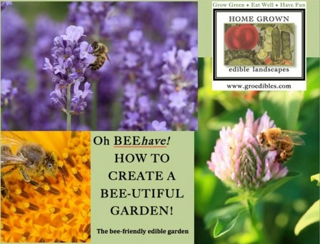 Oh…BEE-have! A Guide to Bee-Friendly Gardening | Annie Haven | Haven Brand | Scoop.it