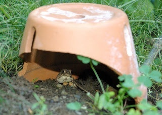 Make a toad shelter | Garden Ideas by Team Pendley | Scoop.it