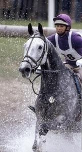 Horse Tack Canad | ruth33hh | Scoop.it