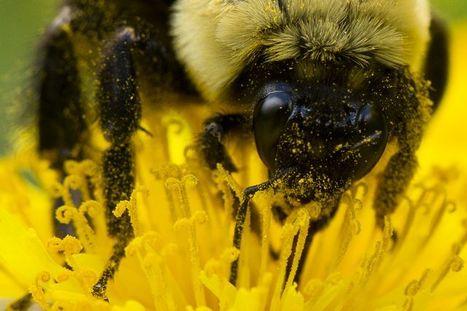 Avis d'experts | Les Néonicotinoïdes: DDT Du 21e Siècle? | Science Actualités | Scoop.it