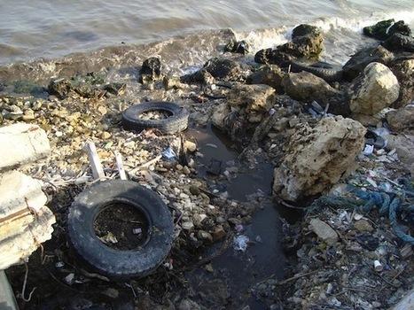 Algérie - 45 délits d'atteinte à l'environnement enregistrés à El Tarf en 2012 - Environnement Algérie | Sam Blog | N'imitez pas, innovez | Scoop.it