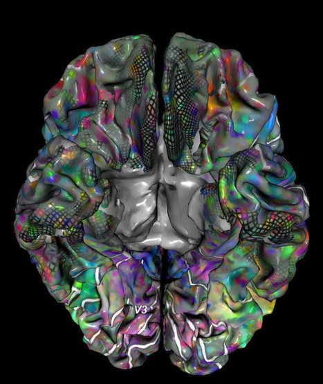 WebGL App – fMRI Semantic Space   Cognitive Psychology. Cognitive and behavioural Neuroscience   Scoop.it