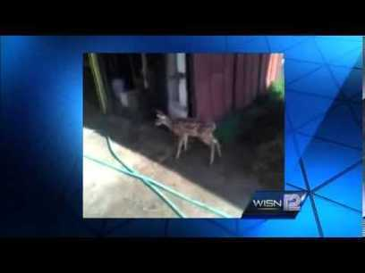 A dozen armed agents raid animal shelter to execute captive baby deer! | Nature Animals humankind | Scoop.it