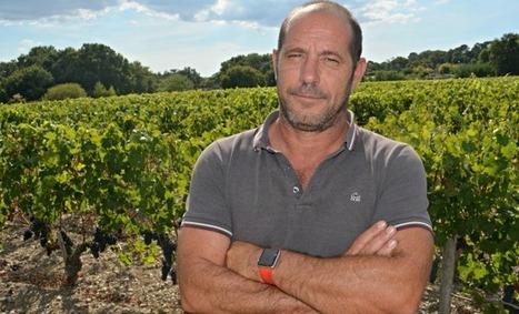 Luchey Halde: savoir attendre pour vendanger Aqui-Bordeaux-Métropole | Agriculture Aquitaine | Scoop.it