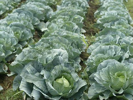 La Sagarpa Jalisco apuesta por agricultura urbana | Cultivos Hidropónicos | Scoop.it