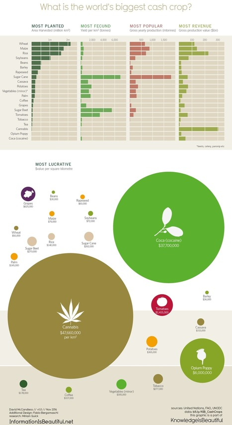 The World's Most Lucrative Crops | Big Picture Agriculture | my universe | Scoop.it