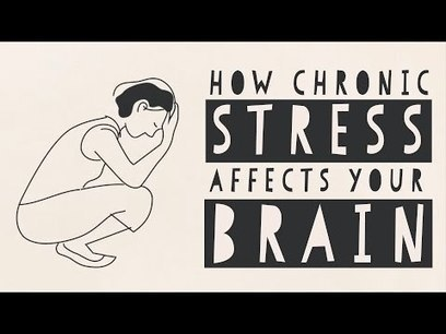 How stress affects your brain - Madhumita Murgia | Learning, Brain & Cognitive Fitness | Scoop.it
