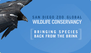 Welcome to the San Diego Zoo   Sager California   Scoop.it