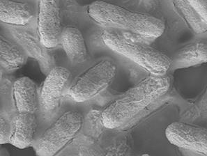 New material kills E. coli bacteria in 30 seconds | SciFrye | Scoop.it