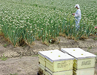 Declining Bee Populations Pose A Threat to Global Agriculture - Yale Environment 360 | Earth Citizens Perspective | Scoop.it
