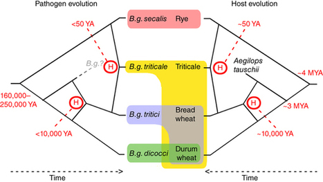 Hybridization of powdery mildew strains gives rise to pathogens on novel agricultural crop species : Nature Genetics | Agricultural Biodiversity | Scoop.it