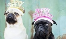 Dog Birthday Party Ideas : Summer : Happy Everything: Animal Planet   Doggy Birthday Party   Scoop.it