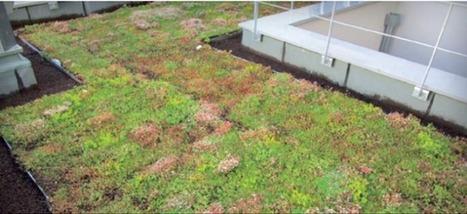 Une matière recyclée pour toiture végétalisée | Solutions alternatives pour un monde en transition | Scoop.it