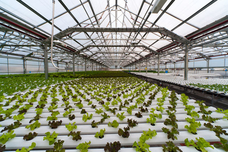 High-Tech Hydroponic Farm Transforms Abandoned Bowling Alley | Growing Food | Scoop.it