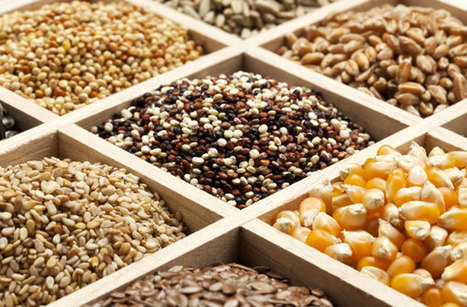 Seed Diversity in Trouble: Monsanto Dominates Global Seed Supply - Sustainable Farming - MOTHER EARTH NEWS | Global competitiveness | Scoop.it
