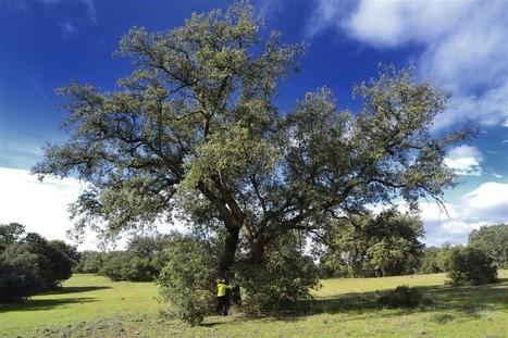 Abraza a un árbol para sentirte mejor | Actualidad forestal cerca de ti | Scoop.it