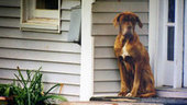 Animals moved to Dallas because of explosion.   Animal's12423   Scoop.it