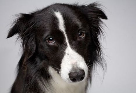 Dogs Know What That Smile on Your Face Means | Naturalist Education | Scoop.it