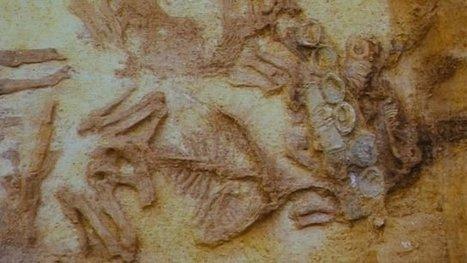 Bilan des découvertes archéologiques en Champagne-Ardenne - Francetv info | Histoire et Archéologie | Scoop.it