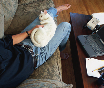 How Can I Tell If My Cat Likes Me? | Pet News | Scoop.it