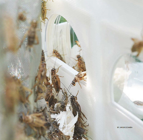 Insect City Utopia: Inside the 'Cricket Reactor' | Entomophagy: Edible Insects and the Future of Food | Scoop.it