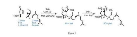 6-epi-Ophiobolin N   SACE and IB Chemistry at PAC   Scoop.it