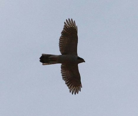 2014 Review Of The Year, Part I: Birds - Yorkshire Coast Nature | wildlife | Scoop.it