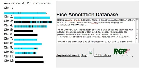 RAD - Rice Annotation Database | bioinformatics-databases | Scoop.it