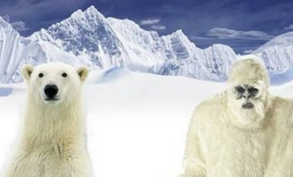 Deep DNA sequencing links mysterious Yeti of the Himalayas to ancient polar bear | Theory of Knowledge | Scoop.it