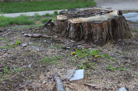 So You Think You Have What It Takes to Successfully Remove a Tree Stump   Professional Lawn & Tree Service   Scoop.it