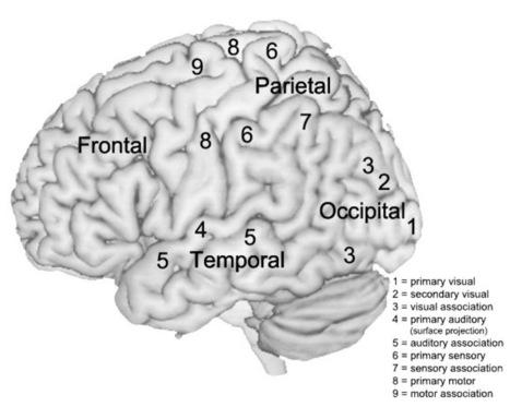 Musical Creativity and the Brain   Social Neuroscience Advances   Scoop.it