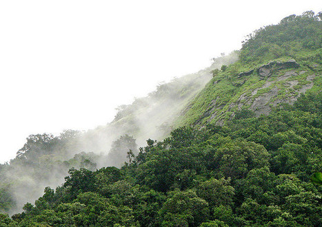 Indigenous Rights to Forests Catch More Carbon   Rainforest EXPLORER:  News & Notes   Scoop.it