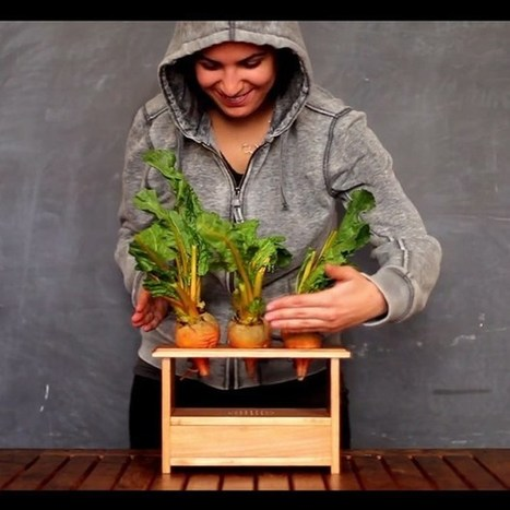 BeetBox uses Raspberry Pi to turn veggies into drumkit - Wired.co.uk | Raspberry Pi | Scoop.it