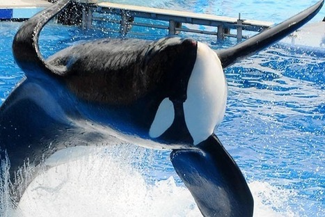 Another 'Blackfish' Black Eye for SeaWorld: Teens Plea for Park to Free ... - TakePart | #OrcaAvengers | Scoop.it
