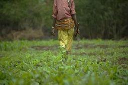 En Afrique, la révolution agricole reste à faire | Questions de développement ... | Scoop.it