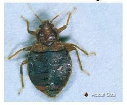 Bedbug problem will be addressed at Helena workshop - KPAX-TV | Bed Bugs | Scoop.it