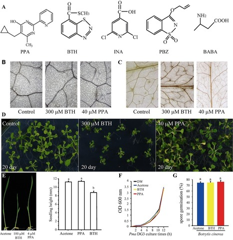 A Novel Pyrimidin-Like Plant Activator Stimulates Plant Disease Resistance and Promotes Growth | Plant immunity | Scoop.it