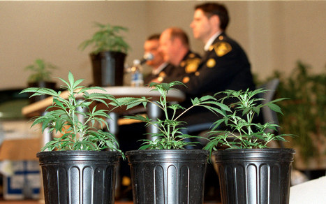 DEA obstructs research into medical marijuana: report | Al Jazeera America | Upsetment | Scoop.it