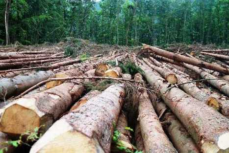 Deforestation Tracked Through Real-Time Satellite | Amazon Deforestation: Issue Study | Scoop.it