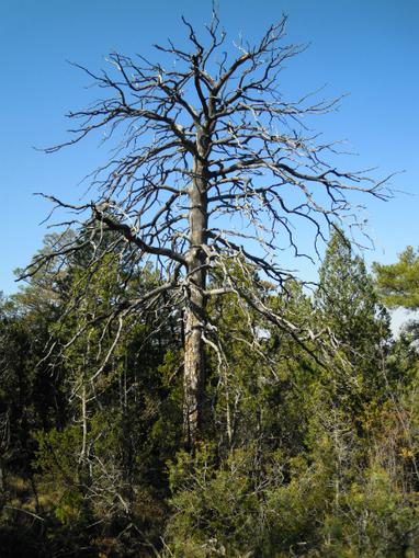 Los bosques necesitan varios años para recuperarse del impacto de las sequías | Agua | Scoop.it