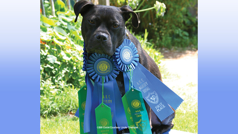From Vick to Victory | WOOFipedia, provided by the American Kennel Club | Dogs | Scoop.it