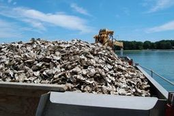 Harris Creek oyster restoration continues - The Star Democrat | Fish Habitat | Scoop.it